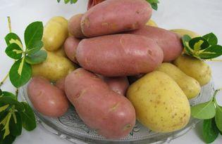 Картофель. Калорийность, польза и вред