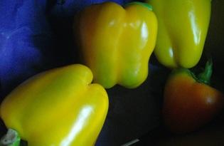 Перец болгарский (зеленый). Калорийность, польза и вред