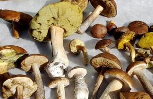 Лесные грибы. Калорийность, польза и вред