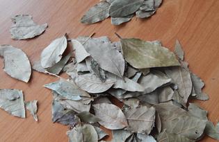Лавровый лист. Калорийность, польза и вред