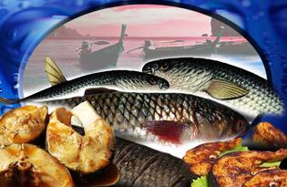 Рыба Пеленгас. Калорийность, польза и вред