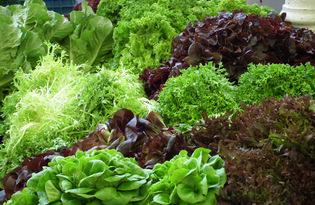 Зелень - Калорийность, польза и вред