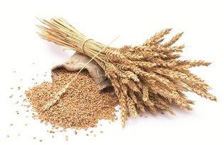 Крупа пшеничная Артек. Калорийность, польза и вред.