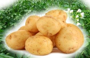 Картофель молодой. Калорийность, польза и вред.