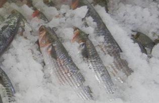 Рыба Барабулька. Калорийность, польза и вред.