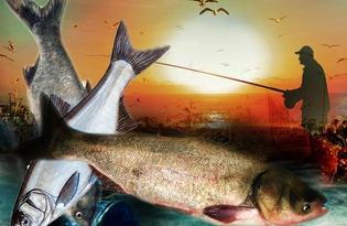 Рыба Толстолобик. Калорийность, польза и вред.