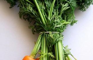 Ботва морковная. Калорийность, польза и вред.