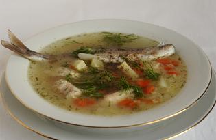 Двойная уха из речной рыбы (пошаговый фото рецепт)