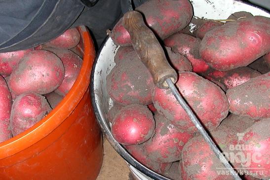 Отварной картофель с салакой